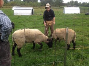 Eathon tending the rams for the changing seasons